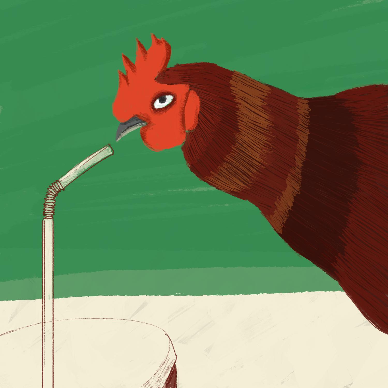 killing_chickens